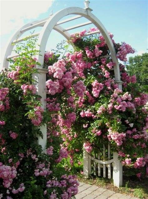 rose arbor and trellis my garden plans pinterest archway with climbing roses climbing roses vines