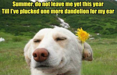 Funny Summer Memes - summer memes image memes at relatably com