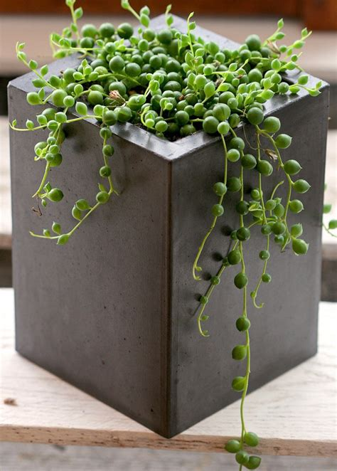 Polished Concrete Planters polished concrete industrial square planter grey polished concrete projects we like