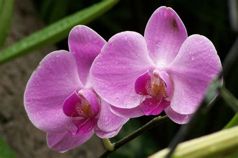 how to take care of orchids after flowering read this to find out