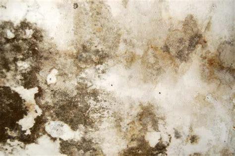 come togliere la muffa dai muri bagno togliere la muffa dai muri