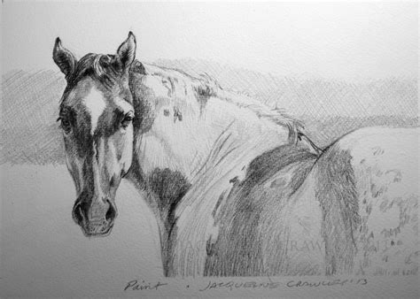 Sketches Horses by Drawing Pencil Artinstructor