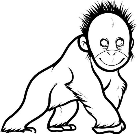 Outline Drawing Orangutan by 17 Best Images About Rainforest Animals On Vocabulary Worksheets Rainforest Animals