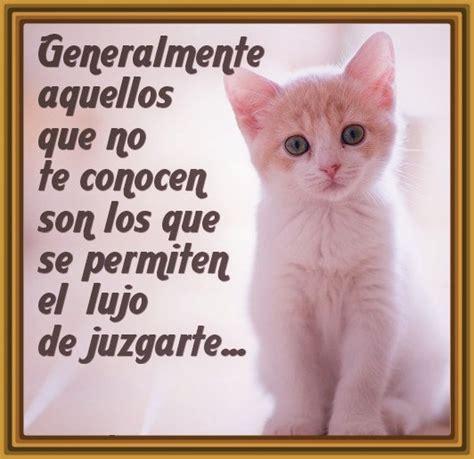 Imagenes Con Frases Bonitas De Gatitos | imagenes de gatitos con frases bonitas para descargar