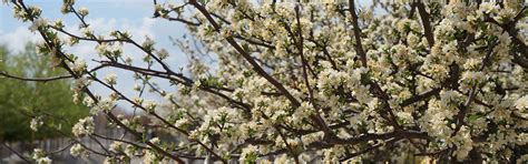 nursery st louis mo trees flowers shrubs st charles