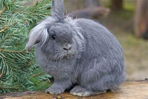 House Rabbit by Caring For A House Rabbit Raising A Happy And Healthy