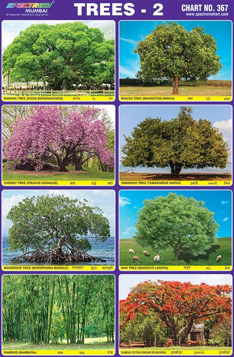 tree charts spectrum educational charts chart 367 trees 2