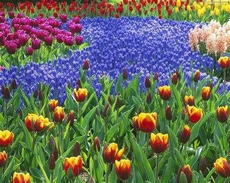 desktop gratis fiori sfondo quot sfondi natura 53 quot 1280 x 1024 natura fiori