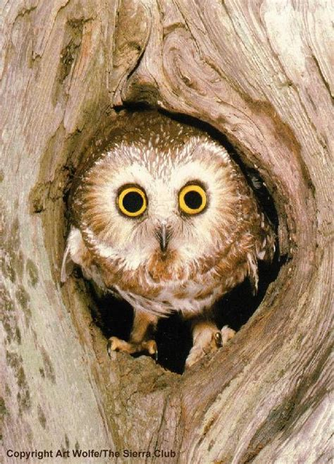 most owls live in tree holes google image result for http