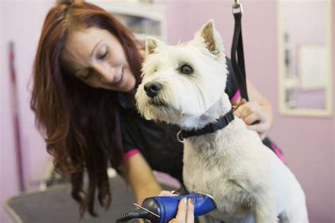 how to to be a groomer how to start a grooming business