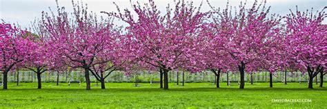Define Botanical Garden Botanical Gardens Ny Purplebirdblog
