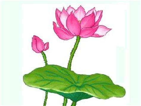 poem on lotus flower in lotus flower poems quotes quotesgram