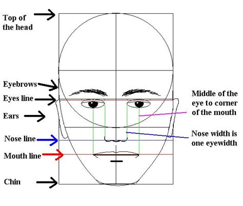proportional diagram 1000 images about self portrait on