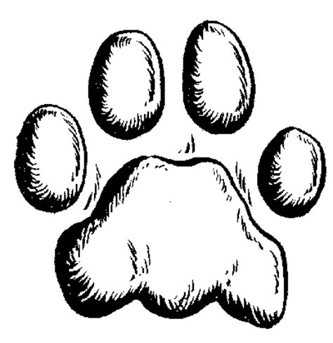 lion paw coloring page people are worried about mountain lions in red bluff