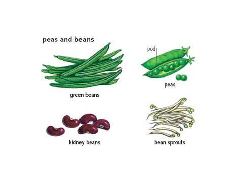 plant 1 noun definition pictures pronunciation and bean 1 noun definition pictures pronunciation and