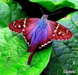 colorful moths colorful moths search butterfly