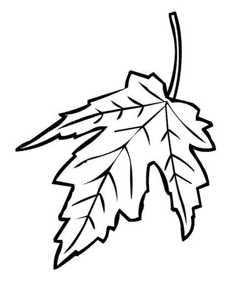 coloring page of a maple leaf free maple leaves coloring pages
