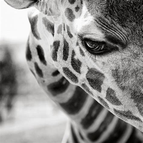 black and white animals black and white animal photography undercover blog