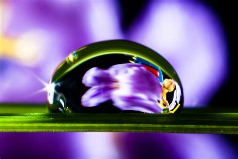 wallpaper daun ungu gambar mekar cahaya ungu daun bunga berkembang