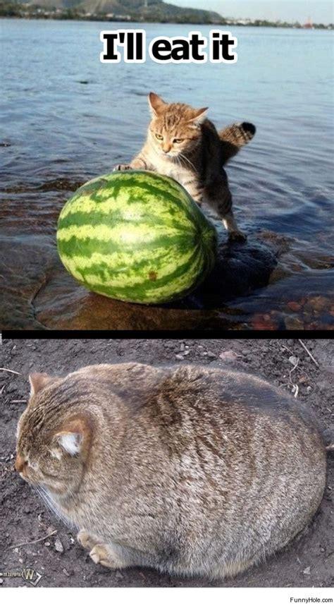 what happens if a eats cat food cat eats watermelon