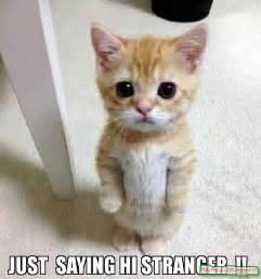 Just Saying Meme - just saying hi stranger meme kitten timesheet 60070