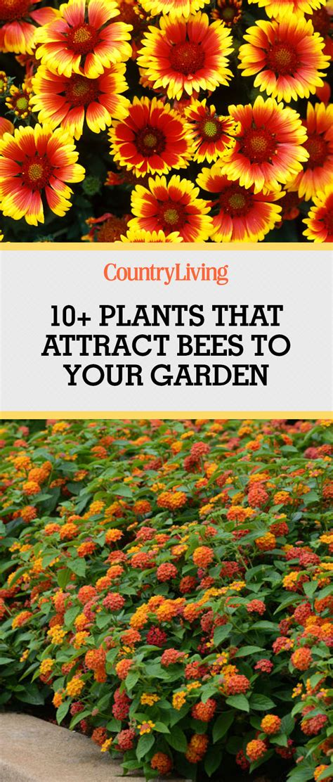 11 Ways To Attract Delicious by Plants That Attract Bees Pollinator Garden
