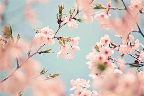 Tumblr Photography Spring Loading