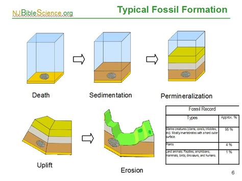 how fossils are formed diagram how are fossils formed diagram 28 images fossilization