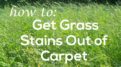 how to get stains out of carpet how to get grass stains out of carpet coit