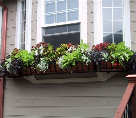best window boxes best plants for shade container gardening