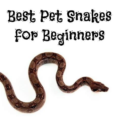 best pet snakes for beginners