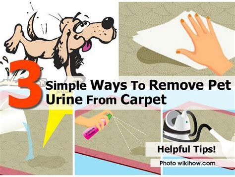 simple ways  remove pet urine  carpet