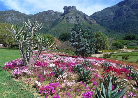 Kirstenbosch Botanical Gardens Audley Travel South Botanical Gardens