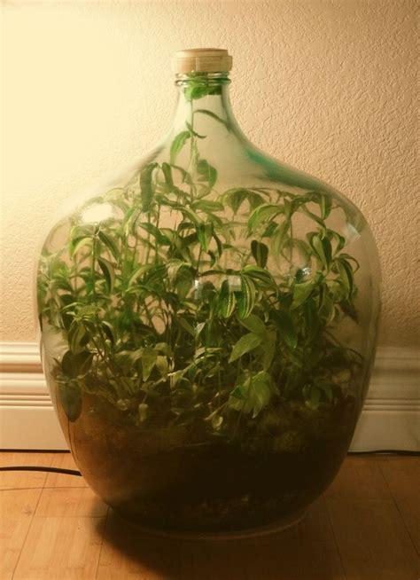 closed terrarium     gallon hand blown