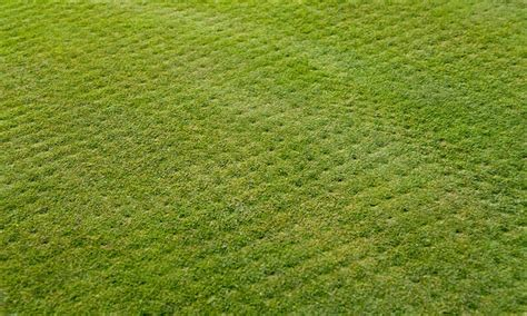 clean cut lawn care 50 off groupon