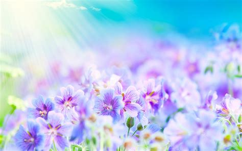 flowers that bloom at beautiful flowers wallpapers background flores imagui