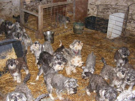 whats a puppy mill puppy mills www imgkid the image kid has it
