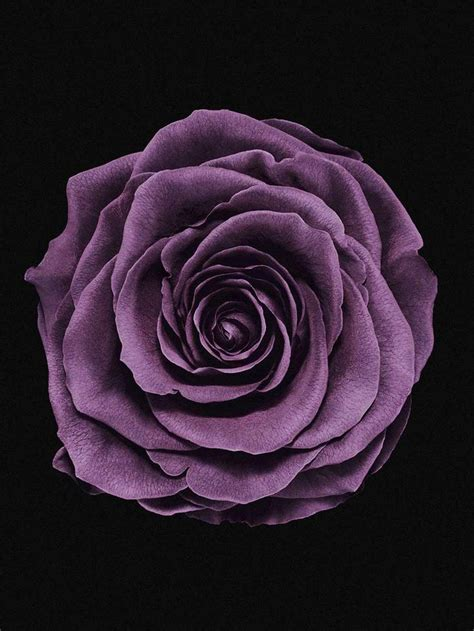 flower texture cosmetics lancome  life photography