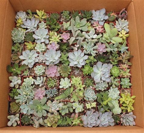 succulent containers for sale pin by the succulent source on succulents for sale pinterest
