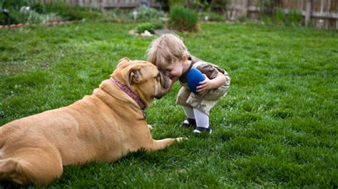 great family dogs 12 dogs that make the best family pets
