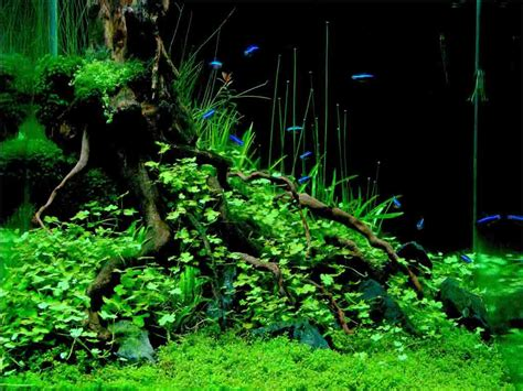 Aquascape Wallpaper by Top Aquascape Wallpapers Weneedfun