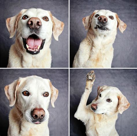 utah humane society dogs shelter photobooth pics help them find forever homes bored panda