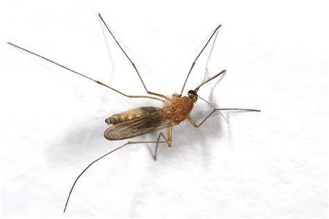mosquitoes in bathroom drains smelly billa episode 3 where are all these mosquitoes