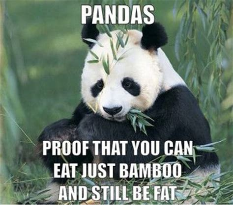 Cute Panda Memes - funny pictures cute baby panda pictures quotes