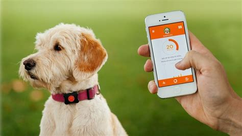 gps for dogs the best pet trackers gps and smart collars for dogs and cats
