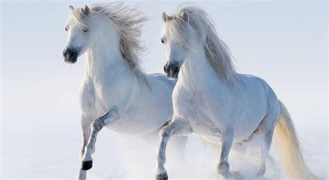 wallpapers hd fondos de pantalla de caballos varias caballos fondos de pantalla horses wallpapers hd