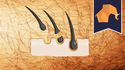 how to pluck male pubic hair grow more pubic hair newhairstylesformen2014 com