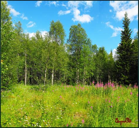 forest glade panoramio photo of лесная поляна forest glade