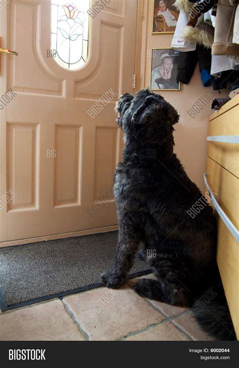 Waiting At Door by Waiting Door Image Photo Bigstock