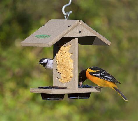 why do birds love peanut butter so much duncraft com
